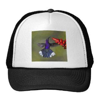 Violet Sabrewing Hummingbird Trucker Hats