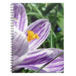 Violet Spring Crocus Spiralblöcke
