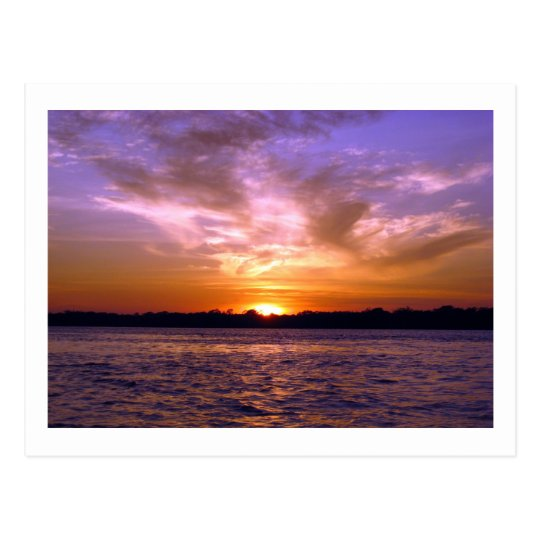 Violet Sunset Postcard