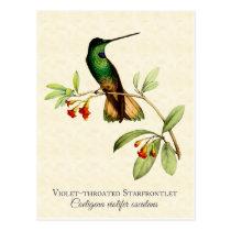 Violet Throated Hummingbird Art Postcard