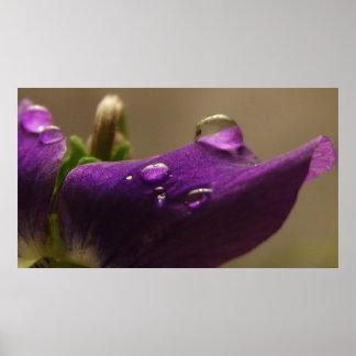 Violet V Poster