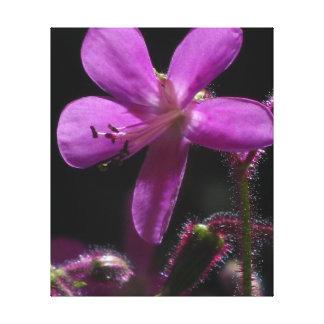 Violet Wild Flower Canvas Print