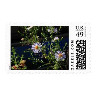 violet wildflower postage stamps