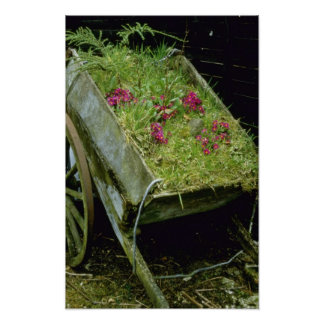 Violet Wooden Cart Planted With Primula juliae flo Posters
