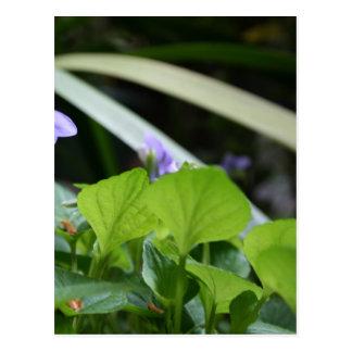Violeta abstracta - fotografía floral postales