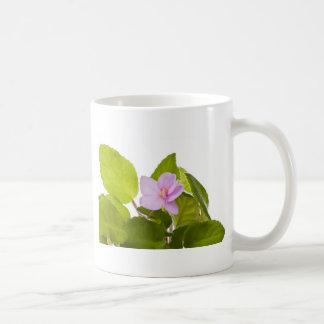 violeta africana - ionantha del saintpaulia taza básica blanca