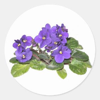 Violeta africana pegatina redonda