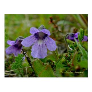 Violeta del Butterwort o del pantano, isla de Postal