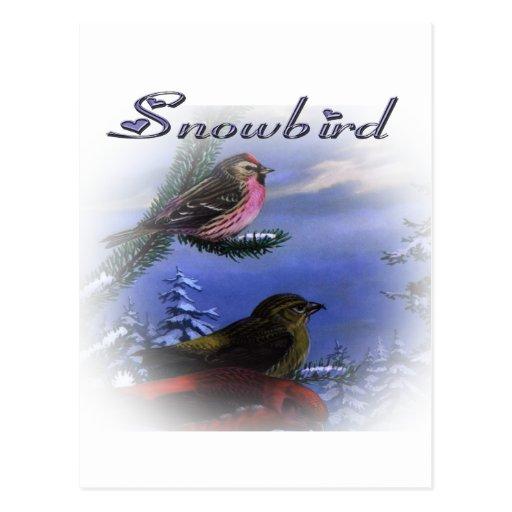 Violeta del Snowbird Tarjetas Postales