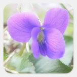 Violeta delicada de la primavera calcomanías cuadradass
