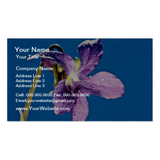 Violeta dulce, flores del odorata de la viola tarjetas de visita