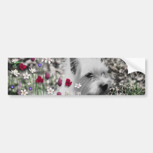 Violeta en flores - perro blanco de Westie Pegatina De Parachoque