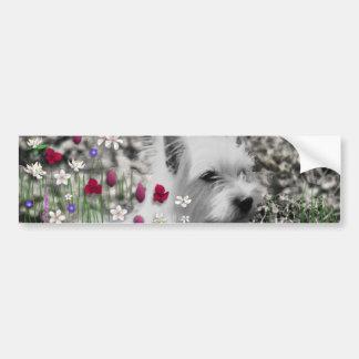 Violeta en flores - perro blanco de Westie Pegatina Para Auto
