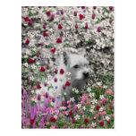 Violeta en flores - perro blanco de Westie Tarjetas Postales