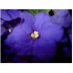 Violeta Esculturas Fotograficas