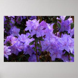 ~ violeta Print~ del rododendro Poster