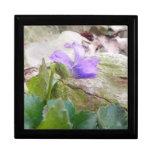 Violeta púrpura en el jardín de piedras cajas de regalo