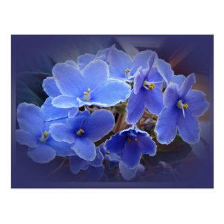 Violetas africanas azules tarjeta postal