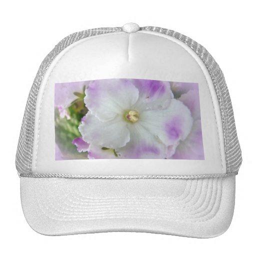 Violetas africanas de lujo púrpuras y blancas gorros