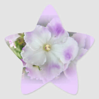 Violetas africanas de lujo púrpuras y blancas pegatina en forma de estrella