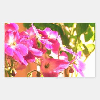 Violetas africanas pegatina rectangular