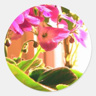 Violetas africanas pegatina redonda