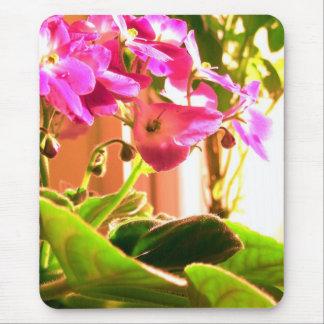 Violetas africanas tapete de ratones