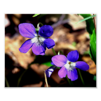 Violetas desafiadas póster