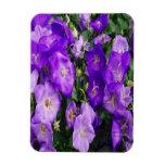 Violetas en la floración imanes de vinilo