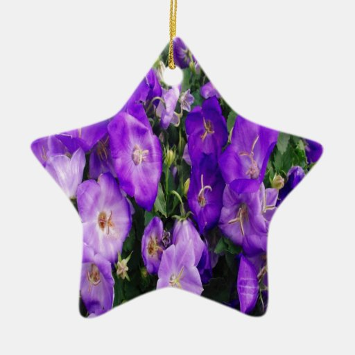 Violetas en la floración ornamente de reyes