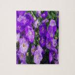 Violetas en la floración puzzles con fotos