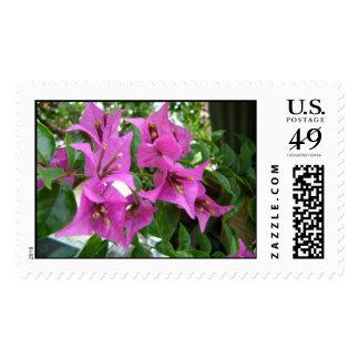 violetas flower stamp