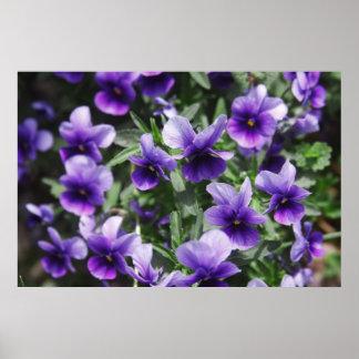 Violetas Poster