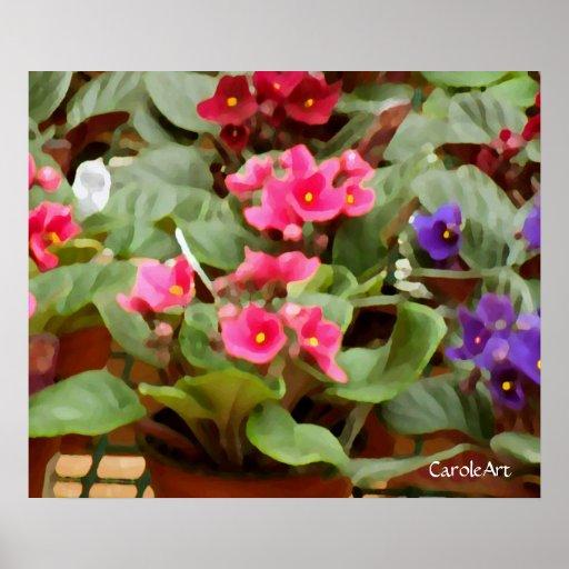 Violetas Potted Impresiones