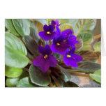 Violetas púrpuras tarjeta