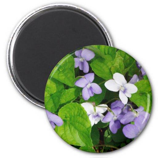 Violetas púrpuras y blancas imán redondo 5 cm