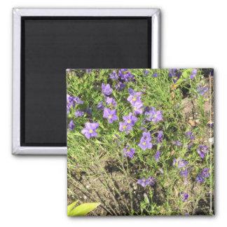 Violets Magnet
