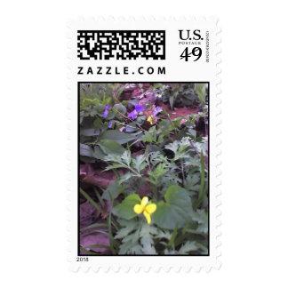 Violets Stamps
