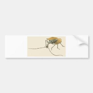 Violin Beetle Bumper Sticker