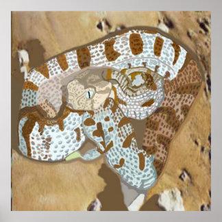 Viper (Macrovipera lebetina obtusa) Poster