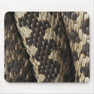 Viper - Vipera berus - skin pattern Mouse Pad