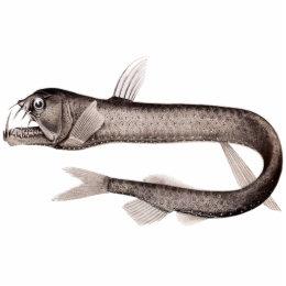 Viperfish Cutout Magnet/Sculpture
