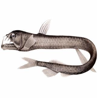 Viperfish Cutout Magnet Sculpture Photo Sculptures