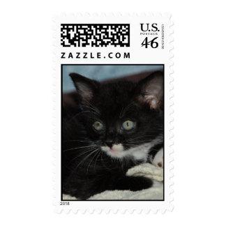 Virgil el sello del gatito