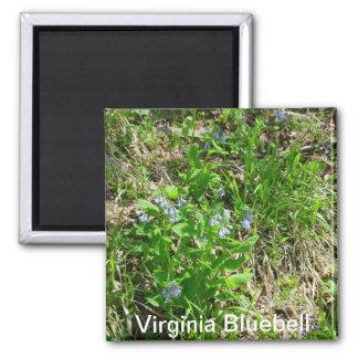 Virginia Bluebell Magnet