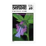 Virginia Bluebells Postage Stamps