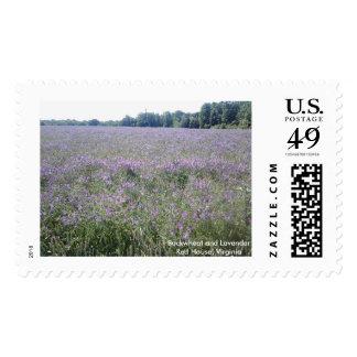 Virginia Buckwheat and Lavender Field Stamp