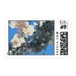 Virginia Cherry Blossoms Postage