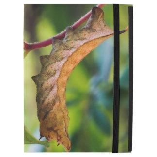 Virginia Creeper Caterpillar iPad Case