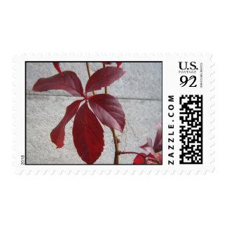 Virginia creeper postage